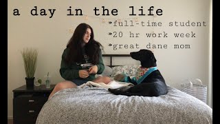 A Day in the Life // Student-Dog Owner