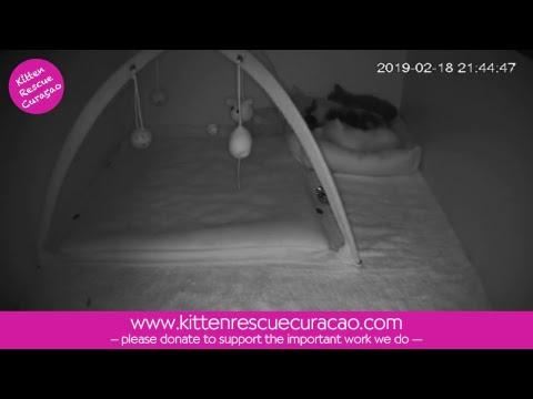 Kitten Cam at Kitten Rescue Curacao