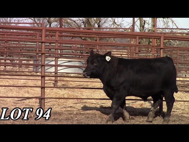 Mead Angus Farms Lot 94
