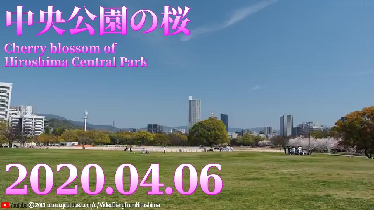 春の風景 花見 「 #中央公園 の #桜 」 2020.04.06 ( #広島市 中区)
