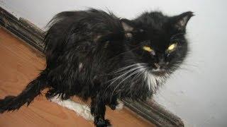 Кошка уже не могла есть и пить, но при виде девушки замурлыкала из последних сил