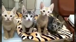 Классные котята)))