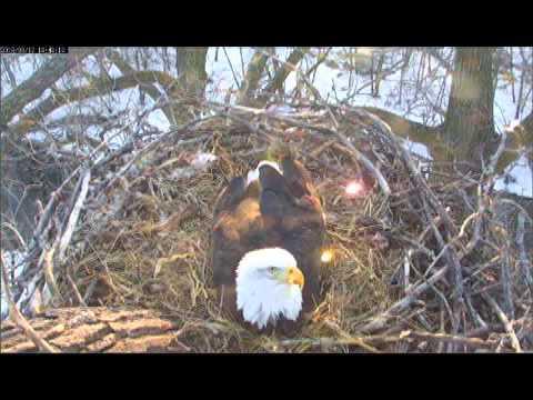 eagles 1st TL 2