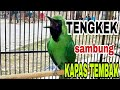 Cucak Ijo Rasa Kapas Tembak Sambung Tengkek  Mp3 - Mp4 Download