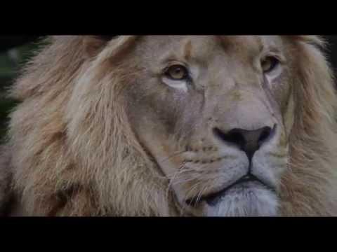 15 CORNERS OF THE WORLD (Trailer)