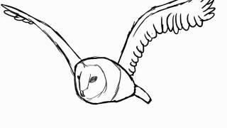 Barn owl flying animation
