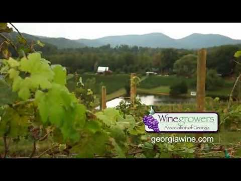 Tour of the North Georgia Wine Country