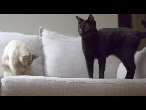 N2 the Talking Cat S4 Ep21 - One Cat Robot