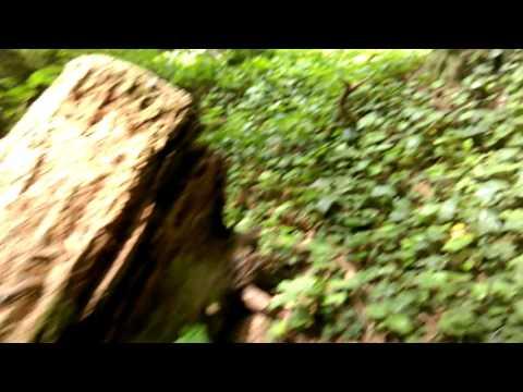 Eureka California - Sequoia Park - Ground Skink