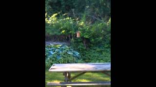 Keeping Squirrels Off The Bird Feeder. The Easiest And Cheapest Way To Do It. And It Works!