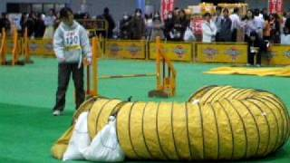 2009_1214心愛七五三・トラスト練習会・JKCカッフ0041.AVI thumbnail