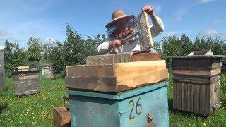 Пчёлы дарят, а мы забираем майский мёд(Снимаю печатный магазин с мёдом., 2016-03-01T04:29:38.000Z)