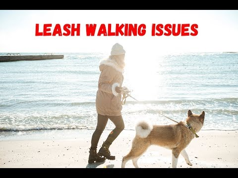Leash Walking Issues - Dog Training Advice Video - ask me anything
