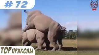 TOP ПРИКОЛЫ #72   Лучшие Новые Приколы Апрель 2018   Свежие Приколы   Подборки Приколов