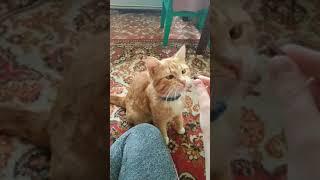 Как научить кошку команде СИДЕТЬ
