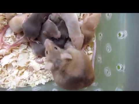Mouse Breeding Tour