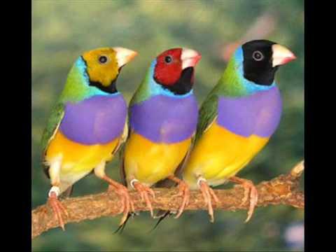 Animales exotico youtube for Imagenes de jardines exoticos