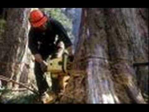 Hal Willis Sings 'The Lumberjack.'
