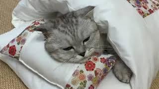 고양이 강아지 방석 쿠션 이불 베개 세트