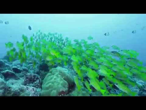 [3D eye pictures] Palau Underwater 4K UHD 0424