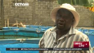 High cost of feed pushes Nigeria fish farmers out of business