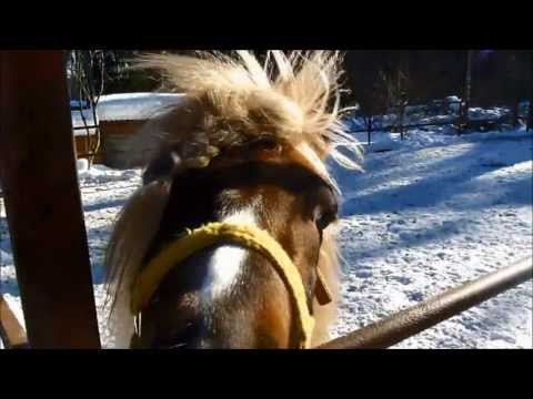 "♞ КСК ""Исток"" ♞ Equestrian Sport Club ""Istok"" ♞"