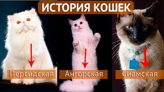 История кошек. Как кошки евреев спасали