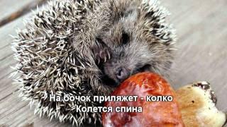 Александр Ермолов - Бедный Ёжик (HD)
