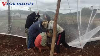 Hướng dẫn thi công nhà lưới