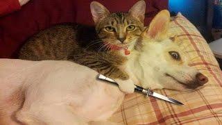 Смешные Кошки и Собаки Подборка #5 - Кошки Против Собак - Смешные Животные Март 2017