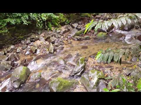 Enjoying A Random Creek In Anton Valley, Panama. [4K] I am back!