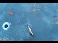 Щука рыбалка на реке Ея 05 02 17г
