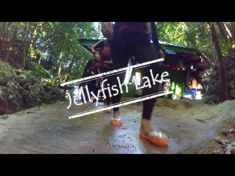 Travel Vlog   Palau   Milk Lake, Rock Island, Jellyfish Lake 2016