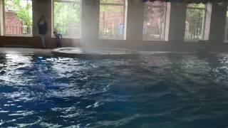 """Выступления синхронисток! Водный балет """"Queen of water""""!"""