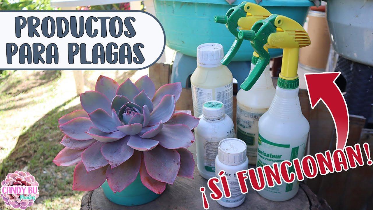 Los productos que uso para las plagas como: Cochinilla, hongo oídio, pulgón, mosca blanca │Candy Bu