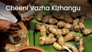 Cheeni Vazha Kizhangu