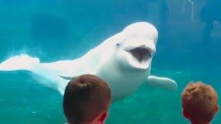 Zoológico de bebês e crianças falha em vídeos engraçados
