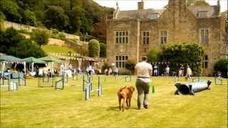 Daybreak Dog Training Demonstration... At Clevedon Court  21st July 2012.