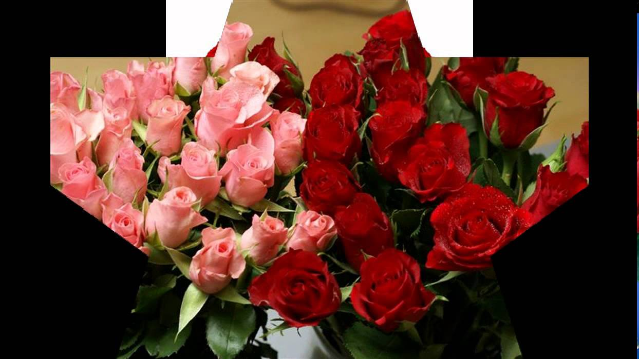 pictures of Red Roses - YouTube