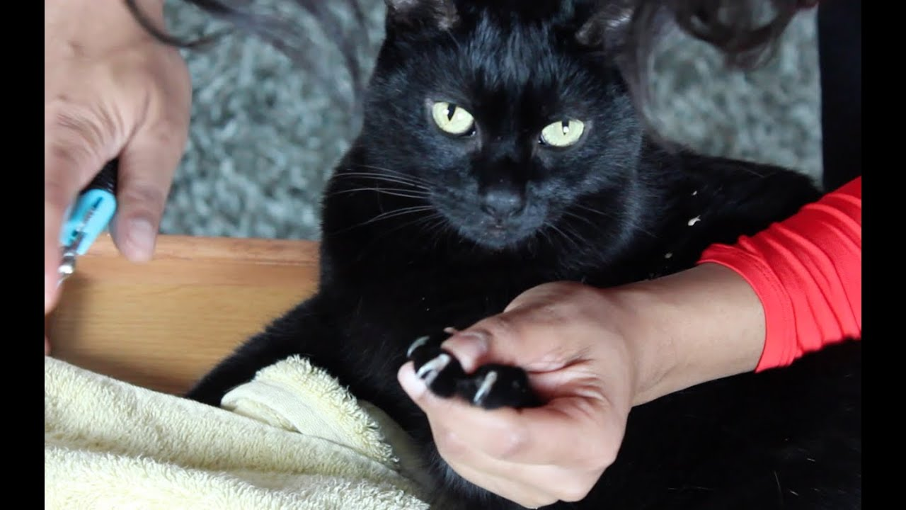 How to Trim Cat Nails or Claws