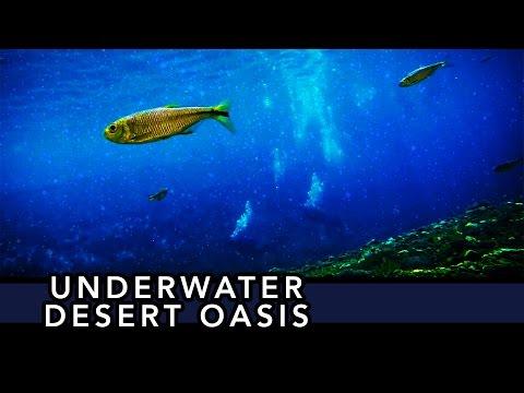 Underwater Desert Oasis [Sleep] [Binaural Beats] [Ambient Image]