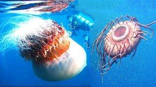 Топ 10  удивительные факты про морские глубины, о которых не все знают