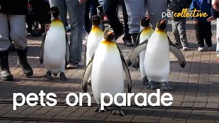 Pets and Animals On Parade