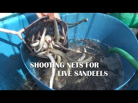 Shooting The Nets For Live Sandeels On The Shambles Bank Out Of Weymouth UK