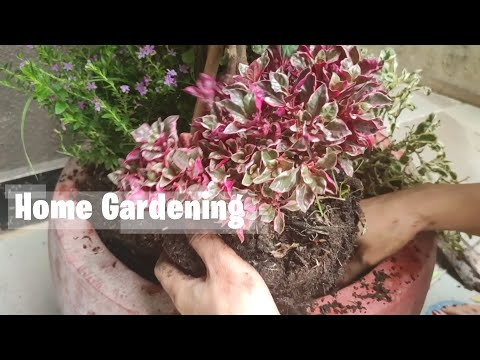 Add more member to the Flower Pot - Home Gardening