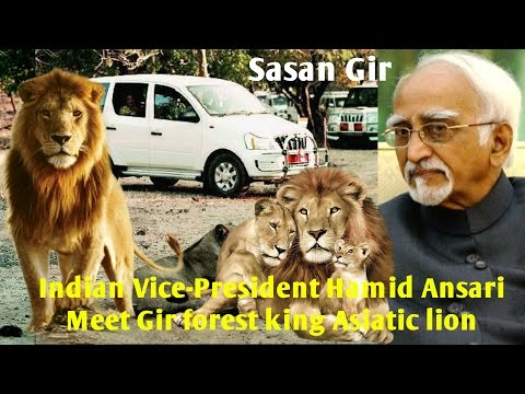 Indian Vice-President Hamid Ansari visit to Gir national park &  see jungle king Asiatic lion