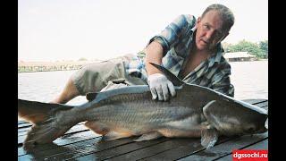 Рыбалка в Таиланде Бангсамран фишинг парк