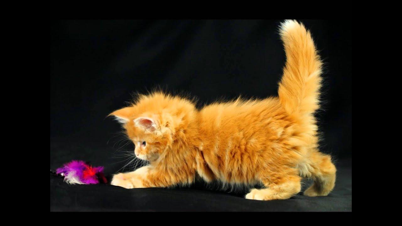 Песни про кошек котят и котов