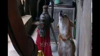 Cute Dog Video: Dakki (our Dog) Mimics Electric Planer