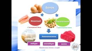 Белки,Жиры и углеводы. Их роль в нашем организме.